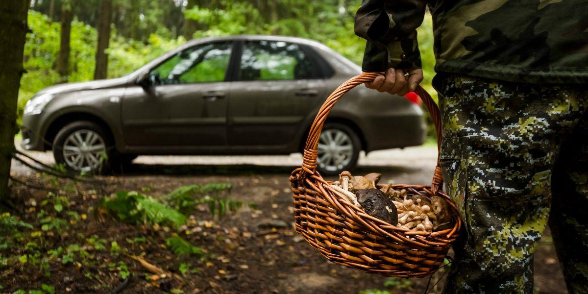 Грибник в лесу с автомобилем Datsun.