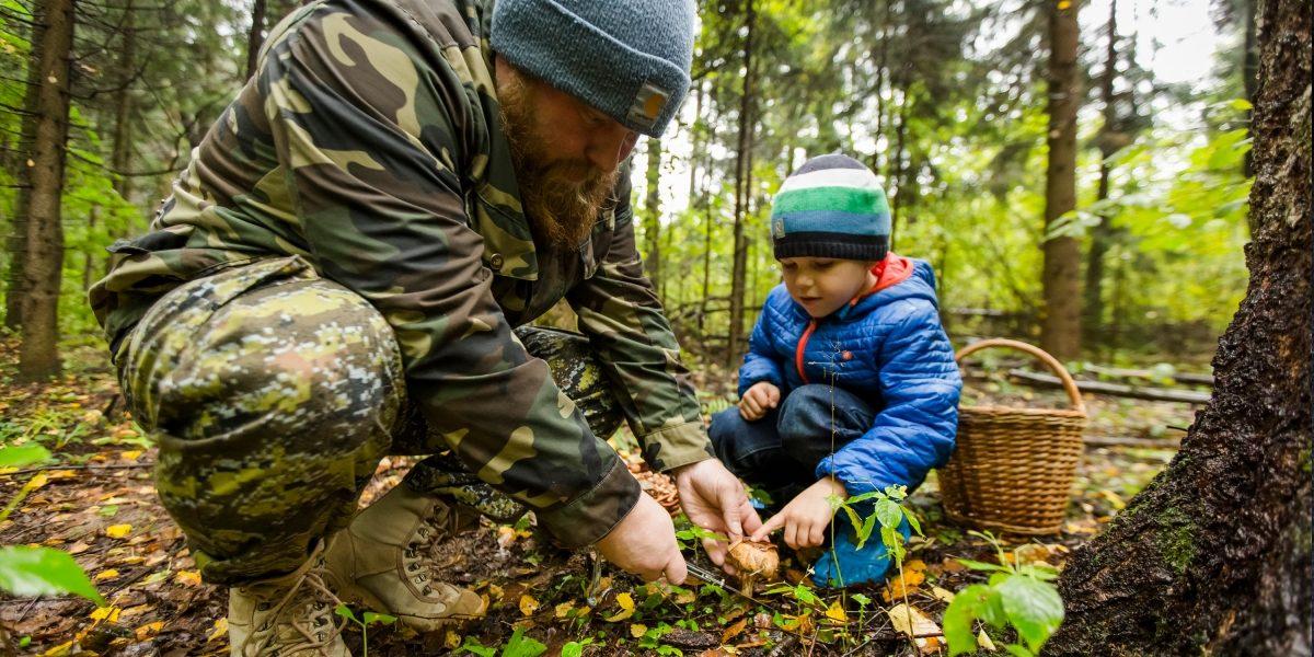 Папа и сын собирают грибы.